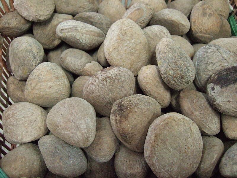 800px-Pangium_edule_seeds
