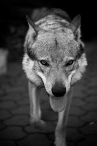 dog-83731_640-1