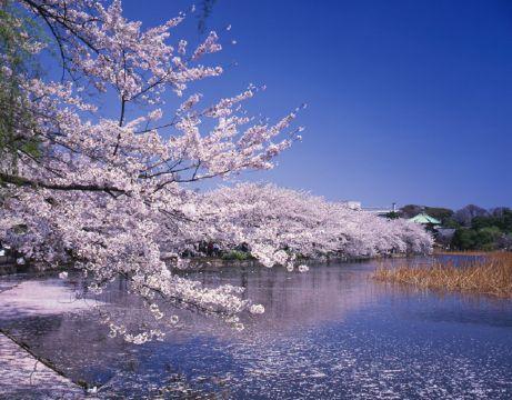 上野恩賜公園1