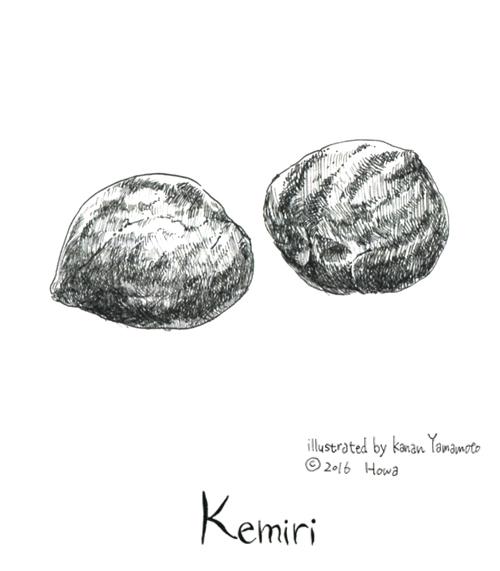 019_kemiri